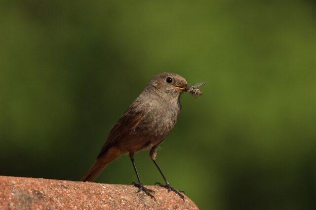 oiseau-mangeant-un-insecte-dr-thomas-wilken-pixabay
